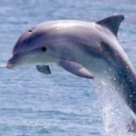 Profile picture of dolphin007